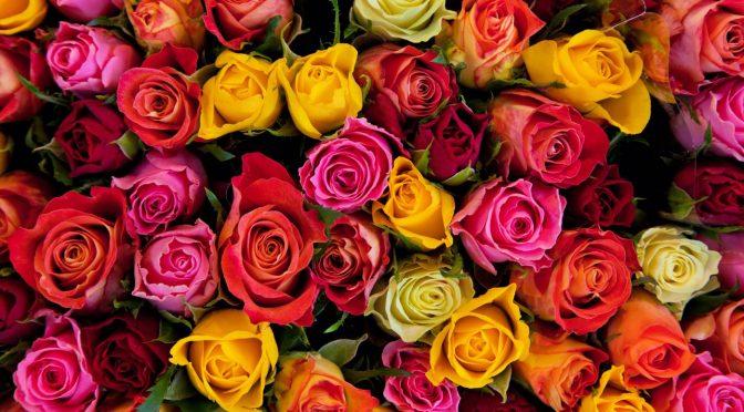 Blumen verschenken mit dem Blumenversand Edelweiß